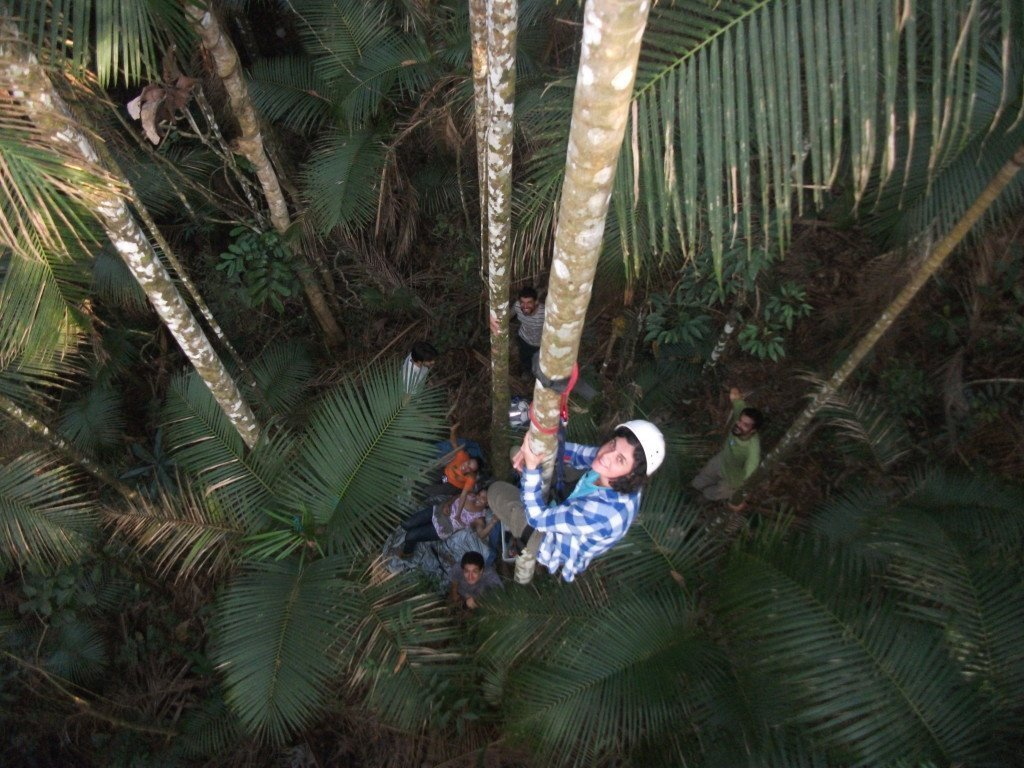 volunteers in the forest, tree climbing