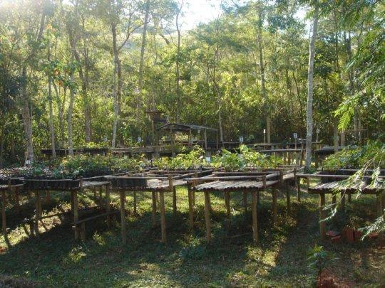 forest nursery binka