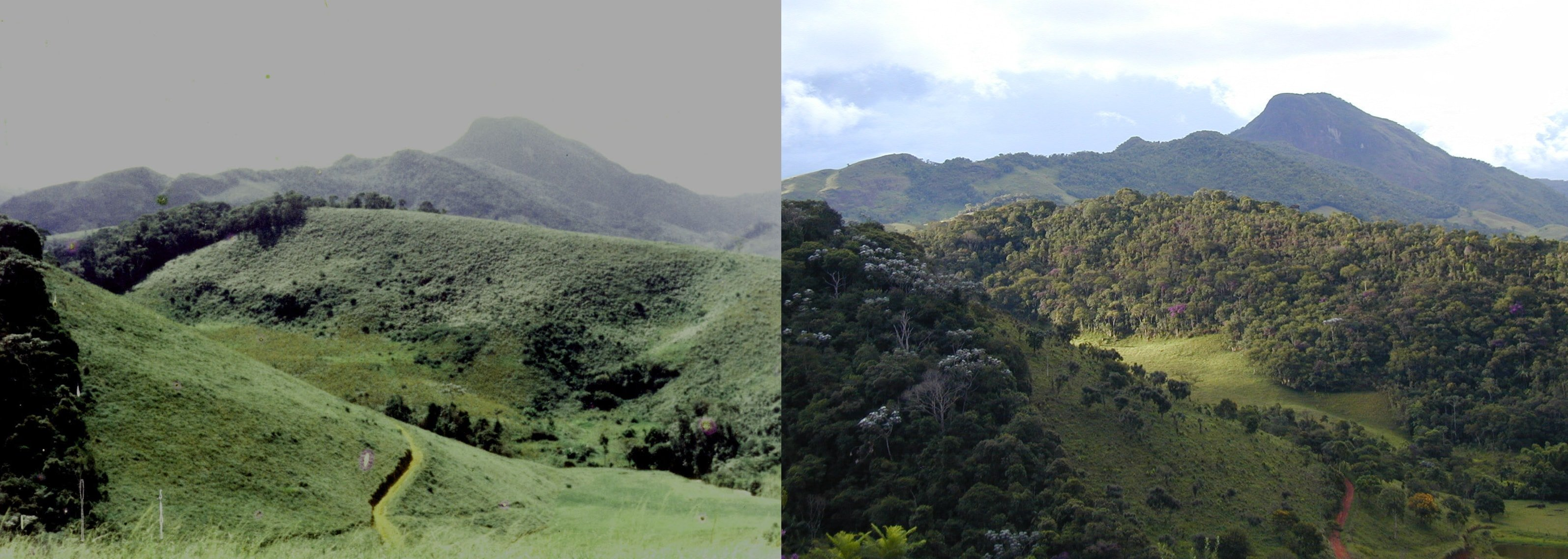 two images compare before and after reforestation at iracambi