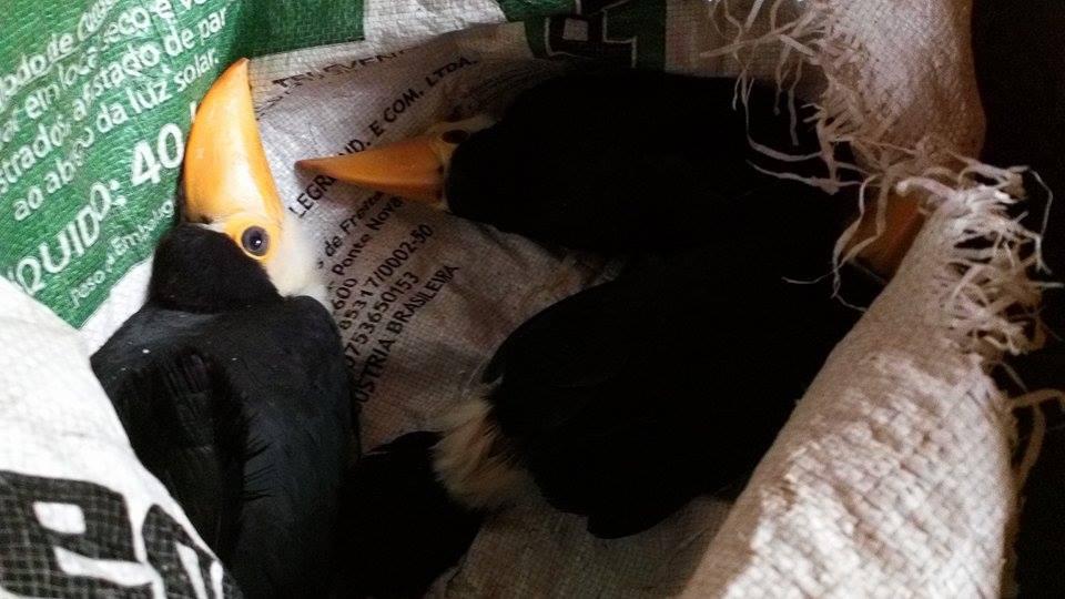 toucans in bag